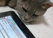 Apps Aren't Just for Humans Anymore; How Your Cat Can Enjoy Your Tablet or Cell Phone